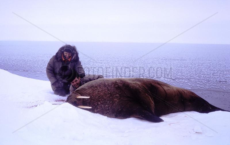 zwei Maenner posieren mit totem Walross
