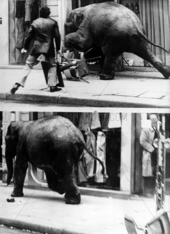 Elefant rennt in Laden