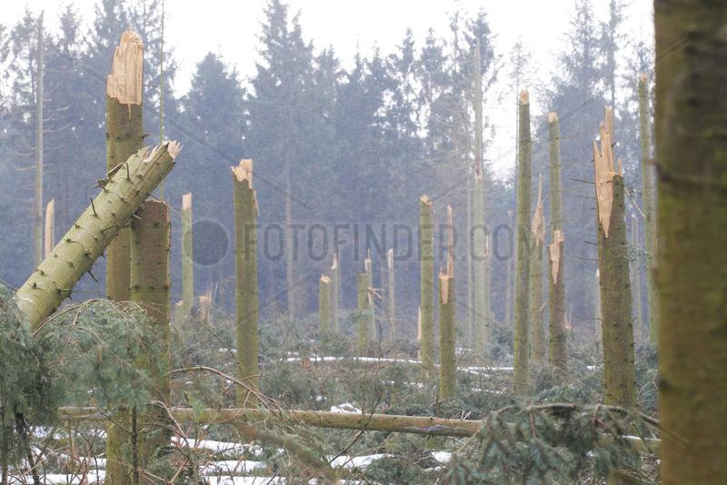 Grossenwiehe,  Deutschland,  geknickte Baeume nach Sturmtief Christian