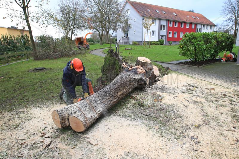 Flensburg,  Deutschland,  Aufraeumarbeiten nach Sturmtief Christian