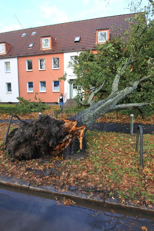 Flensburg,  Deutschland,  Sturmtief Christian sorgt fuer Schaeden