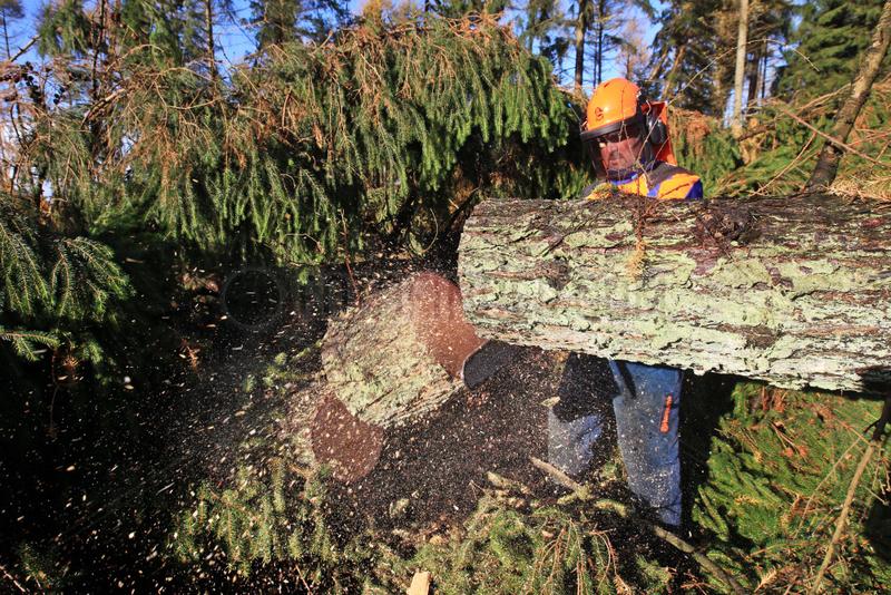 Kropp,  Deutschland,  Sturmtief Christian sorgt fuer schwere Schaeden im Wald