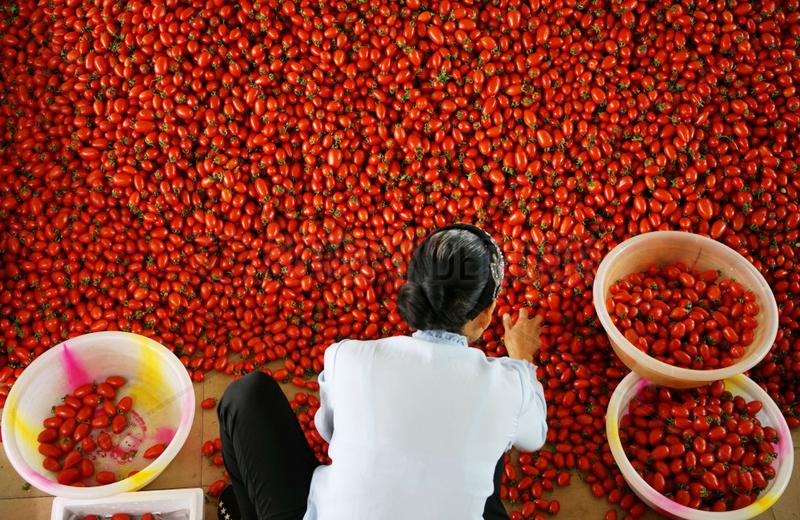 CHINA-YUNNAN-YUANMOU-AGRICULTURE(CN)