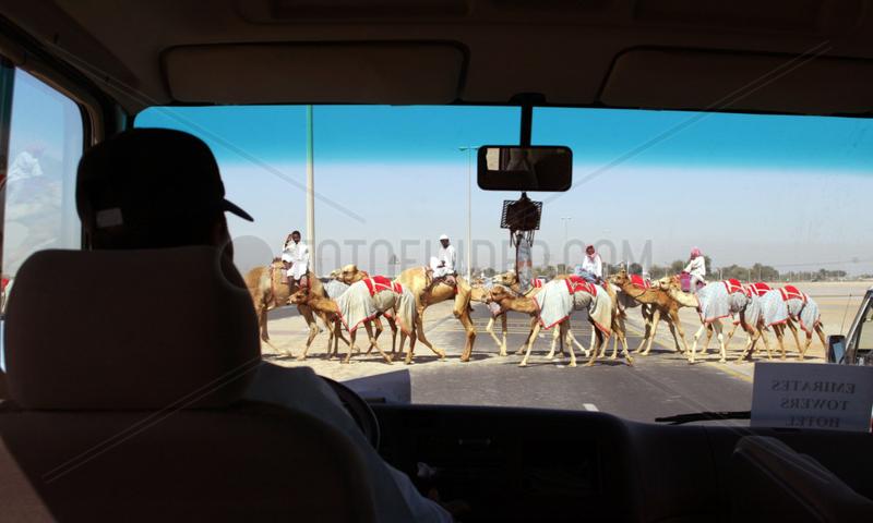 Kamele ueberqueren eine Strasse,  Dubai