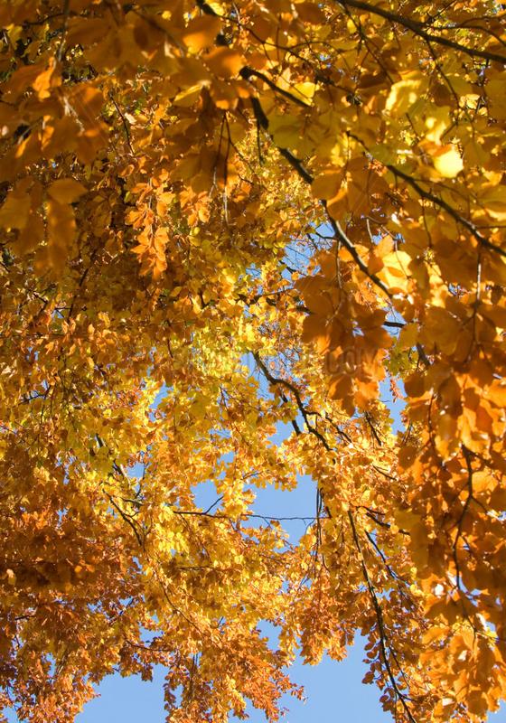 Berlin,  sonniger Herbsttag