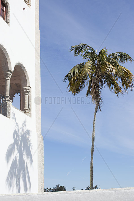 Palm tree growing in tropical destination
