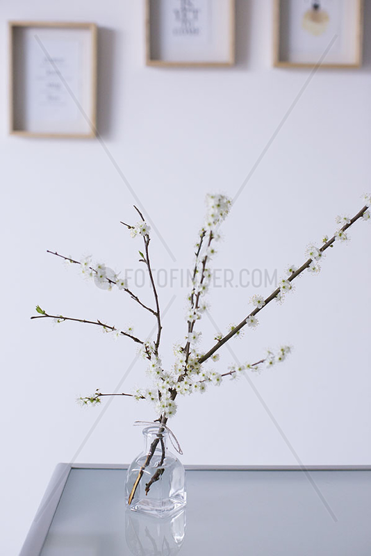 Cut cherry branches in vase