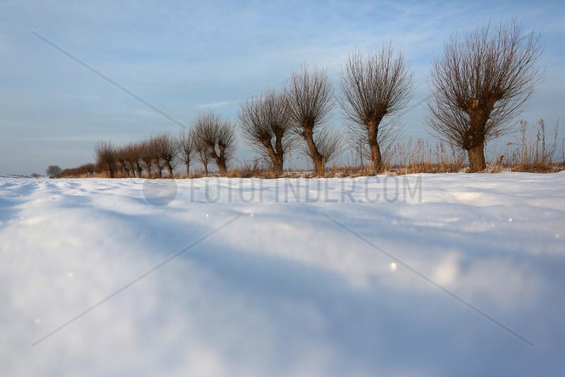 Wustrow,  Deutschland,  Kopfweiden im Winter