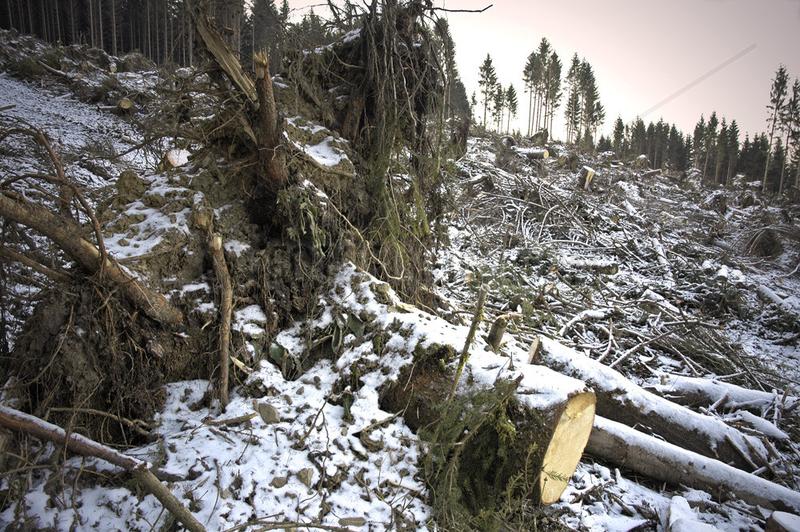 Windbruch im Rothaargebirge