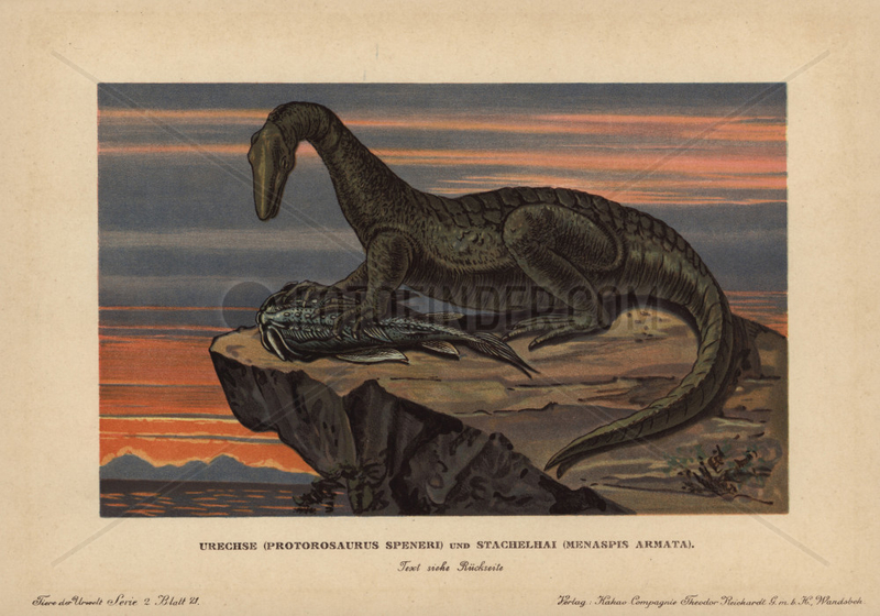 Protorosaurus speneri preying on a Menaspis armata.