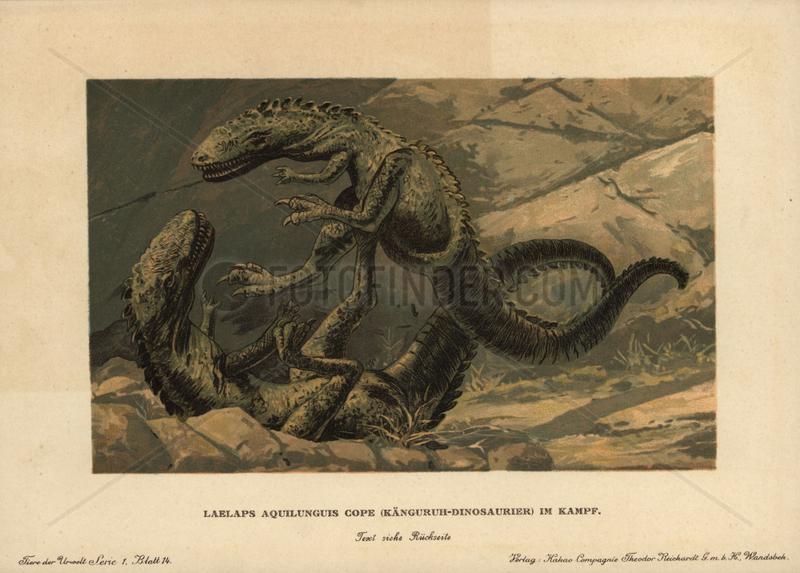 Dryptosaurus aquilunguis,  extinct genus of primitive tyrannosaur that lived in the Cretaceous period.
