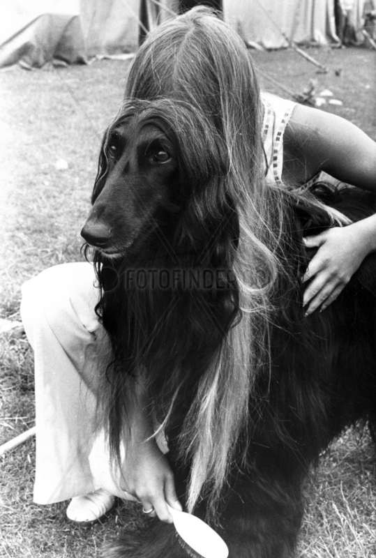 Afghan dog and owner with similar hairstyles,  June 1974.