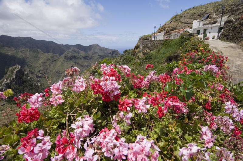 Chinamada,  Spanien,  im Anaga-Gebirge