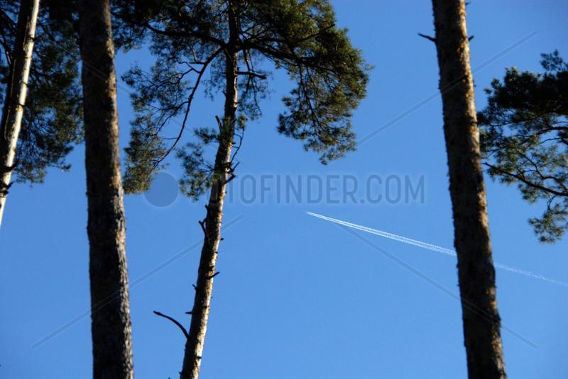 Kondensstreifen eines Flugzeugs ueber einem Wald.