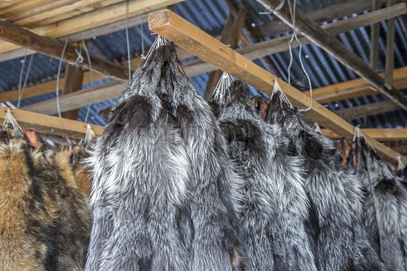 Fox farm and raccoon dogs for furs,  Hengdaohezi,  Heilongjiang,  China