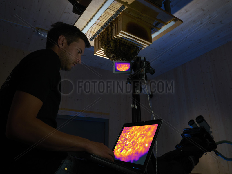 Apidologie - Benjamin Rutschmann observing the bees' activity with a thermal camera. Hobos - University of Wuerzburg,  Germany