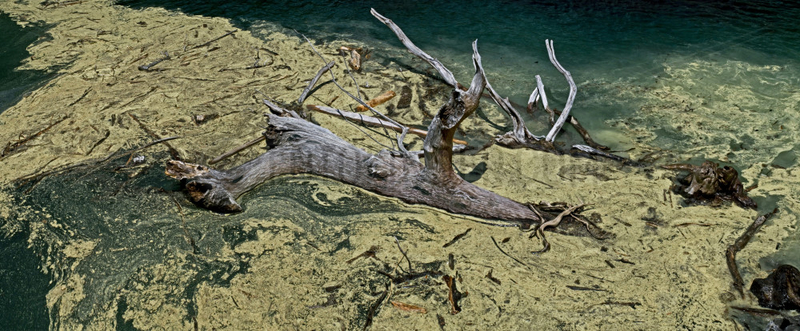 Pollen and driftwood on a lake - Catalonia - Spain