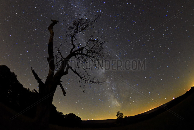 Starry sky and Milky Way on a dead tree,  lights of the wind farm of the Lomont massif,  Franche-Comte,  France
