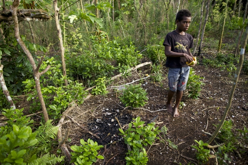 Kanak and fire to repel pigs New Caledonia