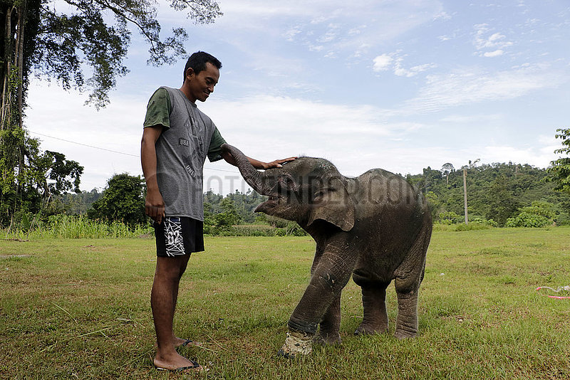 INDONESIA-ACEH-BABY ELEPHANT-INJURY-RECOVERY