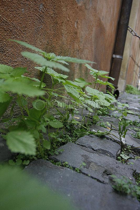 feuchtigkeit und Wachstum in Rom
