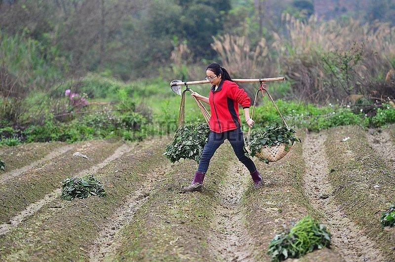 CHINA-GUANGXI-Rongshui-Armutsbekaempfung (CN)