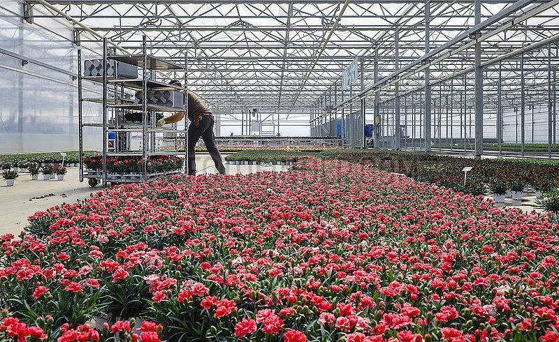Gartenbaubetrieb,  Kempen,  Niederrhein,  Nordrhein-Westfalen,  Deutschland
