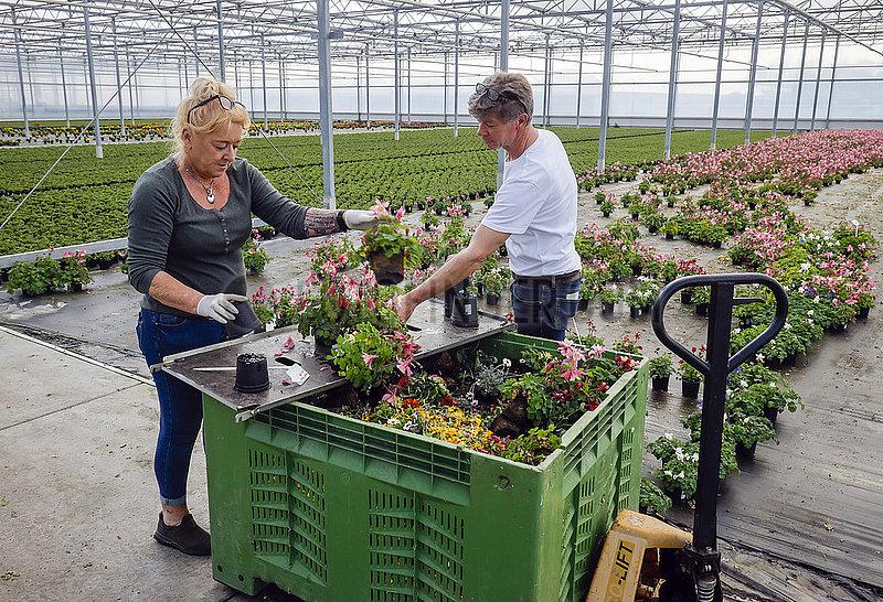 Coronakrise,  Topfblumen werden entsorgt,  Kempen,  Niederrhein,  Nordrhein-Westfalen,  Deutschland