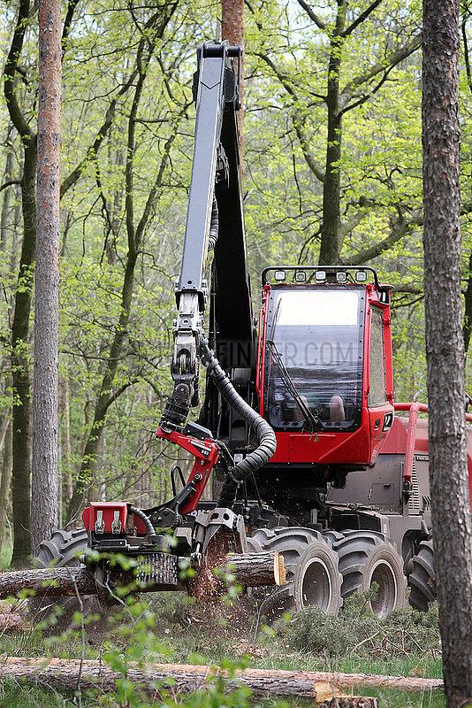 Doebrichau,  Deutschland,  Harvester in einem Kiefernwald entastet einen Baumstamm