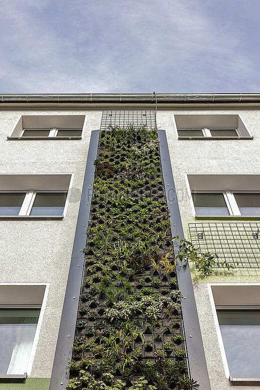 Fassadenbegruenung an Wohnhaeusern an der B224,  Essen,  Ruhrgebiet,  Nordrhein-Westfalen,  Deutschland