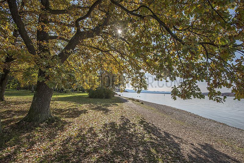 Herbsttag am Starnberger See,  Percha,  Bayern,  Oktober 2020