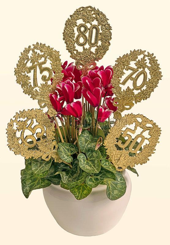 Alpenveilchen,  Geburtstagsgeschenk,  50.,  65.,  70.,  75.,  80. Geburtag,  Symbolbild Alter