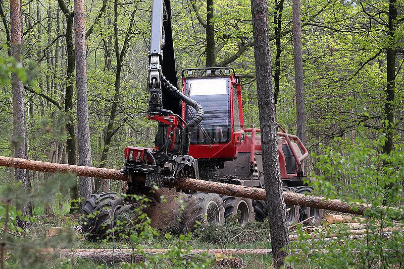 Doebrichau,  Deutschland,  Harvester nimmt in einem Wald einen Baumstamm zum Entasten auf