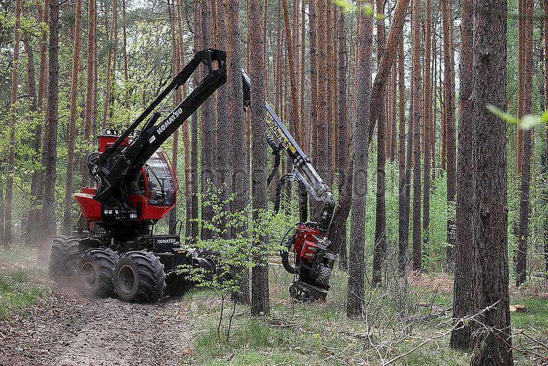 Doebrichau,  Deutschland,  Harvester faellt in einem Wald einen Baumstamm