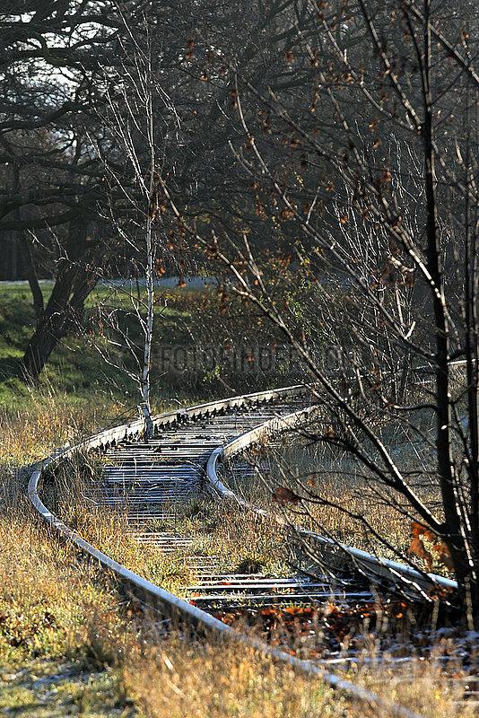 Berlin,  Deutschland,  Baeume wachsen im Gleisbett einer stillgelegten Bahnstrecke auf dem Tempelhofer Feld