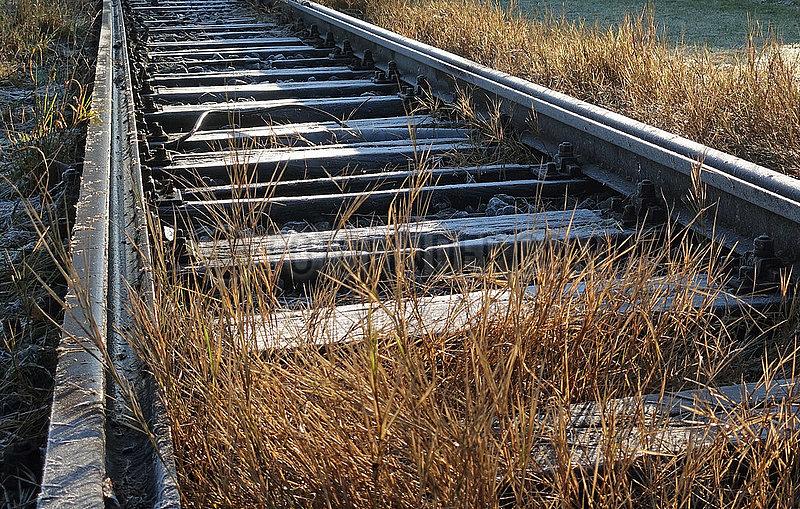 Berlin,  Deutschland,  Graeser wachsen im Gleisbett einer stillgelegten Bahnstrecke auf dem Tempelhofer Feld