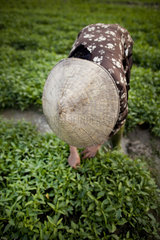 Baeuerin in einem Reisfeld in Vietnam