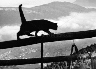 Katze auf Zaun in den Bergen