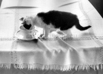 Katze trinkt Cafe