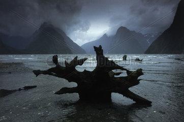 grosse Wurzel liegt am Ufer