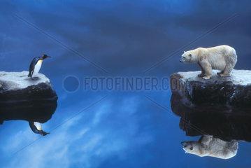 Pinguin und Eisbaer am Wasser