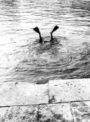 Taucherflossen gucken aus Wasser