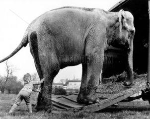Kind drueckt Elefanten auf den Wagen
