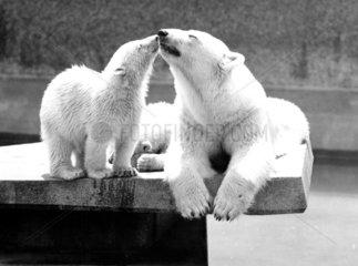 Baerenmutter und ihr Kleines