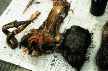 Tigerpfoten  Baerentatzen und Penisse zu verkaufen