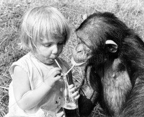 Maedchen und Schimpanse teilen Cola