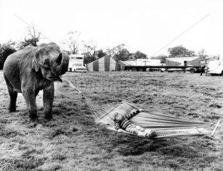 Elefant haelt Haengematte