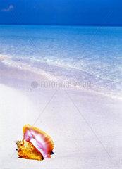 CUBA-Muschel am Strand