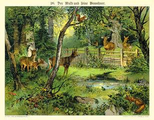 Die Bewohner des Waldes  Illustration  1885