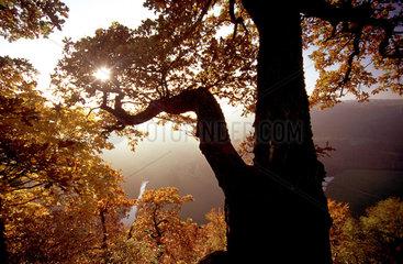 Herbststimmung im Naturpark Obere Donau.